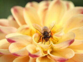производство на мед